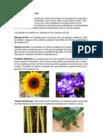 clasficacion de los animales y plantas.docx