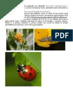 buburuza Coccinella septempunctata