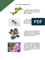 Curiozitati Despre Insecte