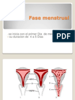 Fase Menstrual