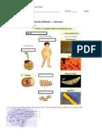 Exercícios Células e Tecidos