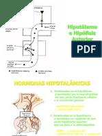 Eje Hipotalamo Hipofisario 2