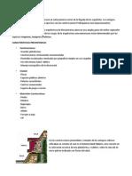 ARQUITECTURA PREHISPANICA.docx