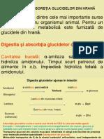 DIGESTIA +PI ABSORB++¦IA GLUCIDELOR DIN HRAN-+¬