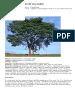 Copaíba - Copaifera langsdorffii - Ticiane Rossi.pdf
