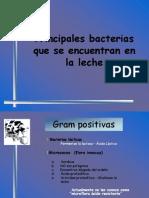 Principales Bacterias Que Se Encuentran en La Leche