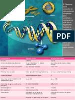 genoma humano-2