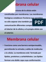 4. Estructura de La Membrana Plasmatica Enero 2013