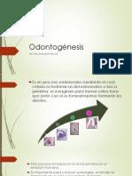 Odontogénesis.pptx