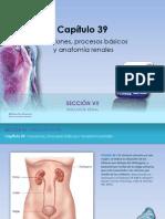 Raff Fisiologia Figuras c39 Func Renales