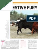 Bullfight in Oman (April 25, 2014)