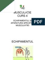 Musculaţie Curs 4