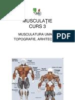 Musculaţie Curs 3