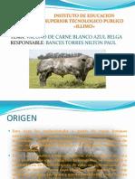 Vacuno de Carne Azul Belga