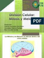 1MM1_Mitosis y Meiosis