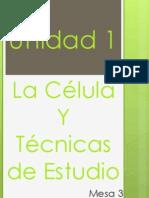 Unidad 1.- La Célula Y Técnicas de Estudio