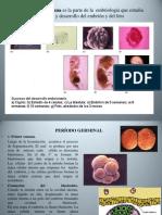 Embriología Xx
