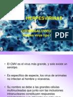 Beta Herpesvirinae[1]