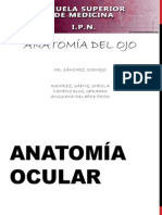 Anatomía Ocular