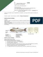Practica Ictiologia 2014