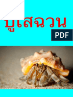 Thai A facts about hermit crabs