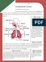respiratory system - answer key