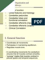 Afferen & Efferent Cerebelum
