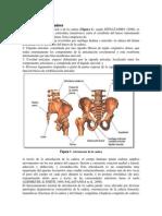 Artroplastia de La Cadera