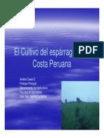 El Cultivo Del Espárrago en La Costa Peruana