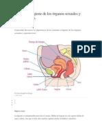 Cuidado e Higiene de Los Órganos Sexuales y Reproductivos