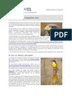 7 Consejos Para Fotografiar Aves 17428