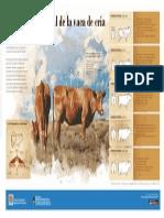 INTA- Infografía- Condición Corporal de La Vaca de Cria