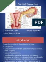 Aparato Femenino (Histología)