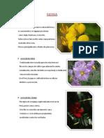 Flores Regiones