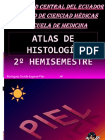 Placas de Histologia 2º Hemisemestre
