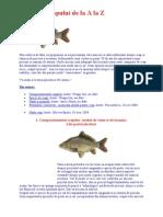 Pescuitul La Crap de La a La Z