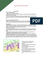 Resumen I2 (1)