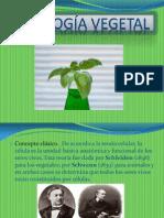 Citologia Vegetal