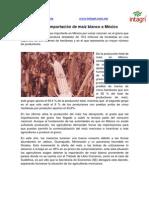 Mexico Frena Importacion de Maiz Blanco
