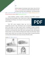 Terapi Rehabilitasi Vestibular
