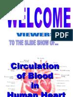 Blood Circulation in Human Heart