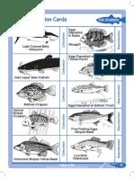 fashionafish-fishadaptationcards