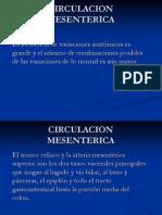 CIRCULACION+MESENTERICA