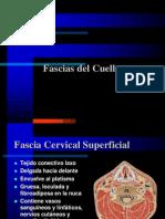 002 Fascias Del Cuello
