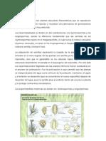 Generalidades de Las Espermatophytas Avance