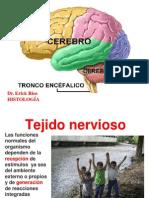 9 Clase, Cerebro y Embriologia