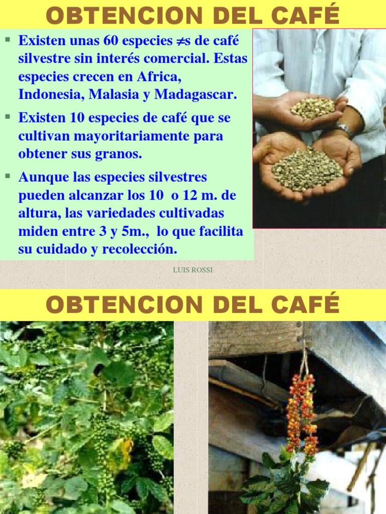 Perfecto Uñas Sobre El Café Ideas - Ideas Para Esmaltes - aroson.com