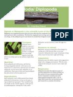 Diploda/ Diplopoda