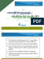 Decálogo Para Prevenir La Pudrición Del Cogollo PC Comp