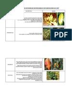 Descripción Deficiencias de Nutrientes